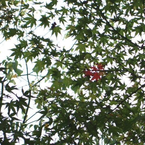 ポッシュ広場 紅葉3