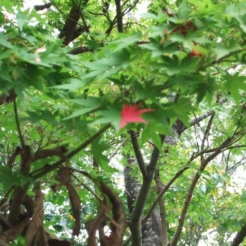 ポッシュ広場 紅葉4